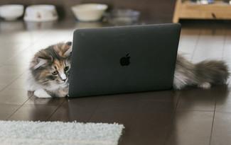 cat126IMGL6353_TP_V.jpg