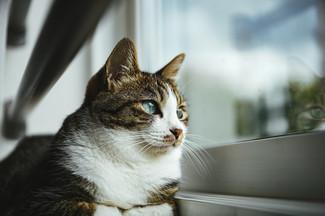 tomcat1582_TP_V.jpg